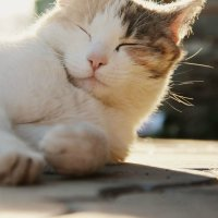 Cat :: Liya_ S