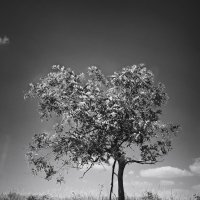 Одиночество :: Ольга Бойко