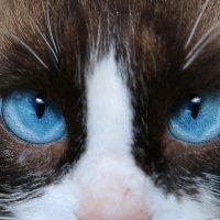 кошачьи глаза :: юрий макаров