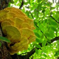 Гриб-цветок в профиль :: Любовь Изоткина