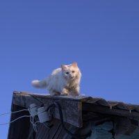 Разноцветный белый :: Ильгам Кильдеев