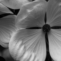 белый цветок :: Yulia Braginets