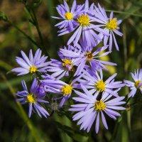 Цветы :: DIMA GROMOV