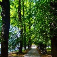 парк :: Вероника Фадеева