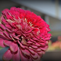 Цветок :: Kristinochka S