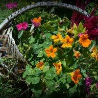 Корзина с цветами :: Kristinochka S