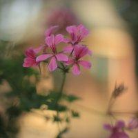 Цветы в Летнем саду :: Orest76 W.