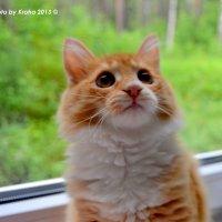 Cat :: Алёна Шкобенева