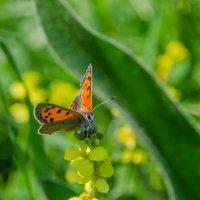 Бабочка :: Виктор Белый