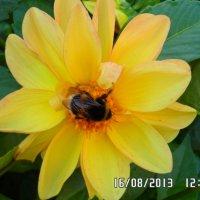 Пчелка :: Любовь Крымова