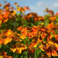 цветы :: Дима Нестеров