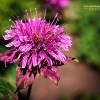 Цветок :: Natasha Zatinatskaya