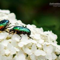 Два жука и комарик) :: Natasha Zatinatskaya