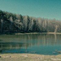 Место, где большие деревья :: Лида Спирина