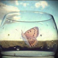 Душа в бокале :: Elena Peshkun