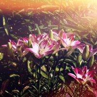 Цветы :: Настя Курганская