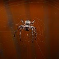 Хозяин паутины :: Денис Гадасюк