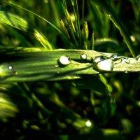 После дождя :: Елизавета Егорова