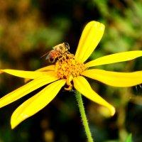 Пчела! :: Кристина Кристина