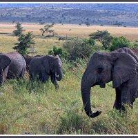 Гиганты Африки :: Евгений Печенин