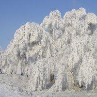 зима художница :: Евгений Золотухин
