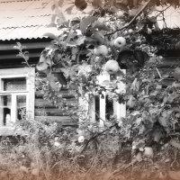 Заброшенный дом :: Маруся Маруся