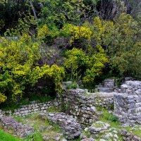 На развалинах старого замка :: Nina Karyuk
