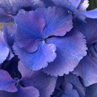 Это натуральный цвет :: Ирина Бруй