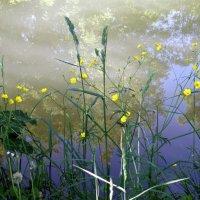 Утро на речке Раковке :: Антонина Балабанова