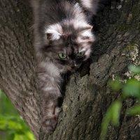 Соседский кот :: Владимир Шадрин