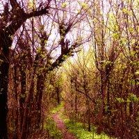 Весна. :: Екатерина Спесивцева