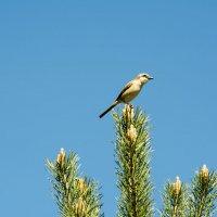 Птичка-невеличка :: Надежда Преминина