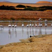 Дикие Животные Африки. :: Jakob Gardok