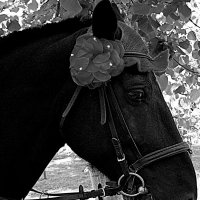 Портрет лошади в профиль :: Marina Bernackaya Бернацкая