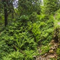 Лесными тропками :: Сергей Цветков