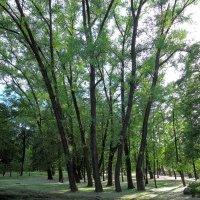 В парке :: Александр Сапунов