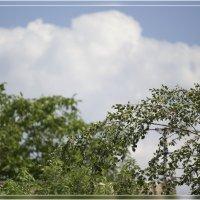 небо 05.06.2018 :: Анастасия Сосновская