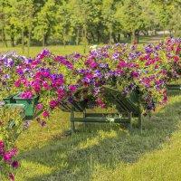 Городские цветы :: bajguz igor