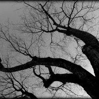 дерево. :: Любовь
