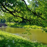 зеленый июнь :: Валентина Папилова