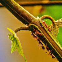 Из жизни муравьёв :: Александр