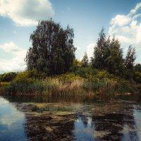 У пруда.................. :: Александр Селезнев