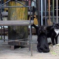 Его Цветочное Величество (ещё одно имя кота) не всех котиков пропускает на территорию сада. :: Татьяна Помогалова