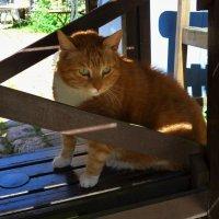 Умнейший кот Bolle имеет свой профиль в Фейсбуке :: Nina Yudicheva