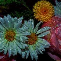 цветочков много не бывает.. :: Роза Бара