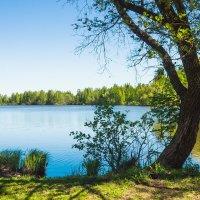 Майский день на северо-западе (5) :: Виталий