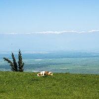 вид на Алазанскую долину и Большой Кавказский хребет :: Лариса Батурова