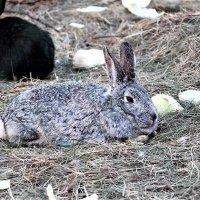 Кролики :: Алла ZALLA