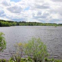 Нижний пруд... :: Александр Широнин