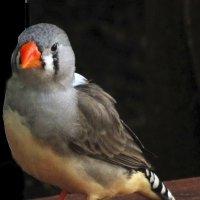 Дивная птичка :: Nikolay Monahov